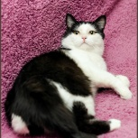 Ласковый котик Тишка!, Новосибирск