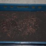 Дендробена венета. Маточное поголовье, Новосибирск