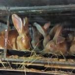 """Кролики """"Серый великан"""", Новосибирск"""