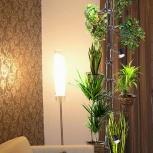 Домашние растения. Уход и подбор растений., Новосибирск