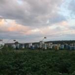 Продам пасеку, Новосибирск