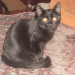 Котик Ники, 6 мес., Новосибирск