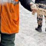 Предлагаем песко-соляную смесь 30 процентов соли, Новосибирск
