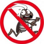 Травля насекомых, Новосибирск