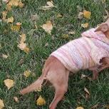 Потерялась собака!!!, Новосибирск