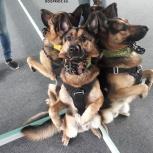 Зооцентр DogPride, Новосибирск