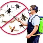 Уничтожение клопов, тараканов, клещей, блох, муравьёв, Новосибирск