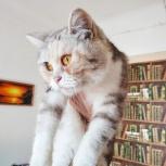 Красивая кошечка ищет дом, Новосибирск