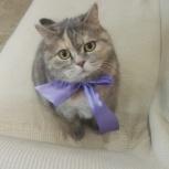 Кошка  ищет новых  хозяев., Новосибирск