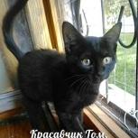 Черный котенок Том 3,5 месяца, Новосибирск