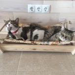 Домик кроватка для кошек и маленьких собак, Новосибирск