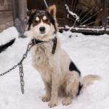 Пёс-красавец Харитон, Новосибирск