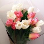 Тюльпаны, Новосибирск
