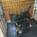 Потерялась собака Ягд-терьер, Новосибирск