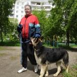Умный поводок для продвинутой дрессировки собак, Новосибирск