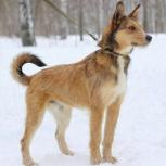 Пёс Тамир ищет семью, Новосибирск