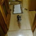 Найдена собака девочка той терьер Дзержинский р-н, Новосибирск