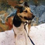 Крупная собака на охрану., Новосибирск