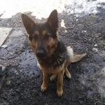 Помогите найти собаку!!!, Новосибирск