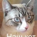 Пропал кот в Бердске / кот с голубыми глазами, Новосибирск
