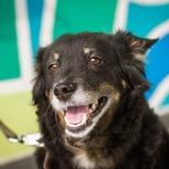 Красивая умная собака Полли ♥, Новосибирск