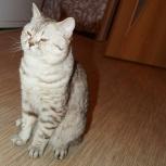 Вязка кот, Новосибирск