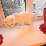 Стрижка кошек котов (грумминг), Новосибирск