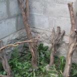 Ствол сухого дерева, Новосибирск