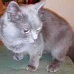 Нашлась серая кошка, Новосибирск
