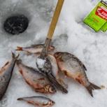 FishHungry - отличная прикормка для рыбалки зимой, Новосибирск