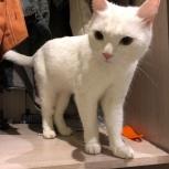 Найдена кошка дп санаторный ( бердск), Новосибирск