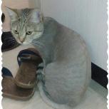 Стрижка котов и кошек. Груминг. Выезд на дом., Новосибирск