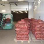 Картофель оптом 5+ от производителя 8 р 1/кг, Новосибирск