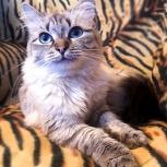 Очаровательная кошека ищет новый дом!, Новосибирск