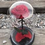 Долговечная роза в колбе, Новосибирск