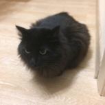 Найден кот/кошка, Новосибирск