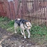 Спасите пса!, Новосибирск