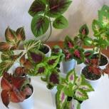 растения для любителей, Новосибирск