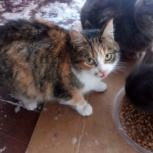 Кошечка ищет хозяина, Новосибирск