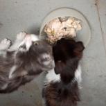 Ищу хозяев, котята, Новосибирск