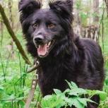 Милый пёсик Черныш мечтает обрести хозяина, Новосибирск