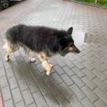 Найдена собака на трассе Академ-Кольцово, Новосибирск