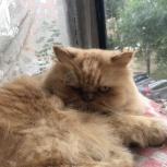 Отдам кота даром, Новосибирск