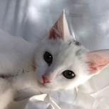 Котенок Долька счастья  4-5 месяцев, Новосибирск