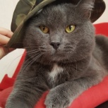 Котик Хвостик, Новосибирск