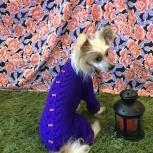 Вязаная одежда для собак, Новосибирск