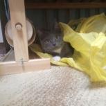 Отдам котёнка в добрые руки бесплатно, Новосибирск