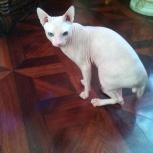 Потерялся кот в районе Нижней Ельцовки СНТ Бытовик ., Новосибирск
