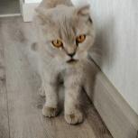 Найдена кошка(кот), Новосибирск