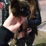 Найден кот!!, Новосибирск